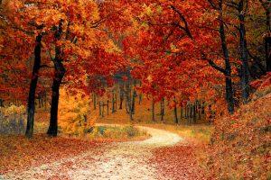 fall event ideas